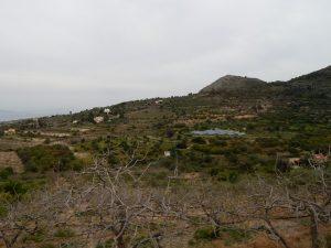 Egina - gaje pistacjowe